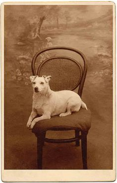 *Libby Hall Collection Don't we wish all our dogs could be this poised? pawloyalty.com kennel software
