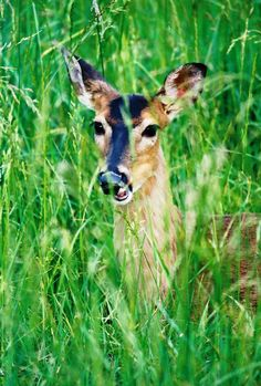 You will see several different kinds of wildlife at Cades Cove