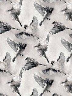 Sparrow Flight byMicklyn