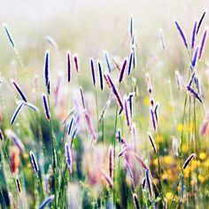 профессиональные фотографии природа растения цветы: 19 тыс изображений найдено в Яндекс.Картинках