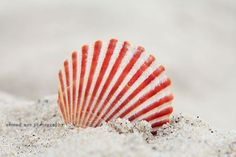 sun rays on sea shells