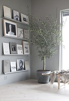 Given the current craze for houseplants, it's hard to imagine there's any un-trod territory there, and yet — I was totally surprised to realize that you can grow an olive tree inside