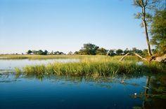 Okavango - note elephant in background