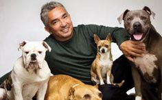 Cesar Millan, known as the Dog Whisperer, had his home investigated this past week on suspicion of animal cruelty. Cesar Millan, Stop Puppy From Biting, Puppy Biting, Rescue Dogs, Pet Dogs, Doggies, Ticket, Daddy, Dog Whisperer