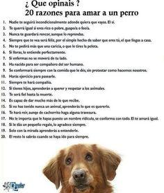 Razones para amar a un perro