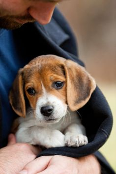 Warm in His Coat (by Thomas Hawk) Beagle pups are so cute.