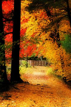 Orange and Gold - Autumn colors in New England