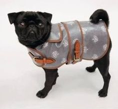 @Nicola Pearce Hann this is a mulberry dog coat. I wondered if we could make Doug something like this for his holidays? Whaddya think?