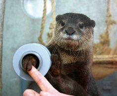 Shake Hands With An Otter At Japan's Keikyu Aburatsubo Marine Park