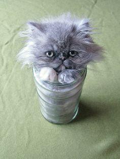 HA HA HA HA HA HA!!!!!!!!!!! oh cat so funny so so funny