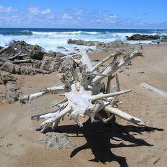 Driftwood on Seapark beach. #kzn #kwazulunatal #southcoastkzn #kznsouthcoast #seapark #driftwood #beach Kwazulu Natal, Driftwood, Coast, Sea, Park, Instagram, Parks, Ocean, Seaside