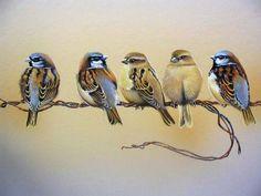 birds iv Ruud Weenink