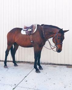 Equestrian and horses