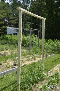A tomato trellis is a freestanding structure usually made from wood or metal that is used to support the sprawling vines and heavy fruit of the tomato plant Providing sup.