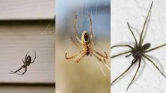Ant Control Lakewood Village TX 75068 Pest Control