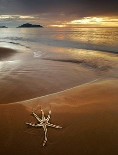Love starfish, the sound of the sea... Looking for heart rocks and seashells....