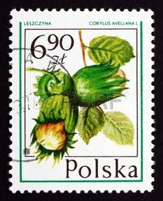 http://us.123rf.com/450wm/boris15/boris151304/boris15130400119/19073935-poland--circa-1977-a-stamp-printed-in-the-poland-shows-hazelnut-corylus-avellana-forest-fruit-circa-.jpg