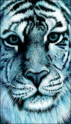 Blue tiger drawn at oekakicentral, the gorgeous ref was from Getty Images Imagebank Blue tiger Tiger Drawing, Lots Of Cats, Animals Beautiful, Beautiful Things, Leopards, Cool Wallpaper, Big Cats, Animal Drawings, Lions