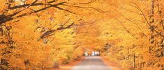 newenglandinthefall - Google Search