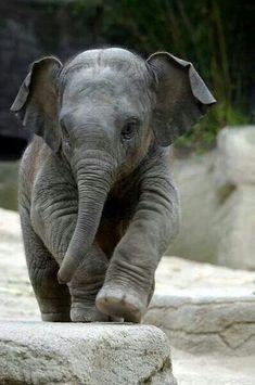 cute-animal-pictures-24.jpg 600×905 pixels