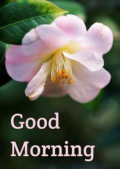 Good Morning Coffee Gif, Good Morning Images, Good Morning Picture, Good Morning Flowers, Morning Pictures, Good Morning Wishes, Good Morning Wallpaper, Birth And Death, Divine Light