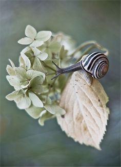 Picture with snail by Magda Wasiczek