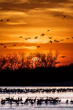 Sunset Cranes in the Platte River
