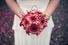 love gerbera daisies!