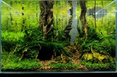 Forest Lair 13.wks   Flickr - Photo Sharing!