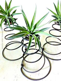 Tillandsia Air Plant Upcycled Coil Planter by DoodleBirdie on Etsy