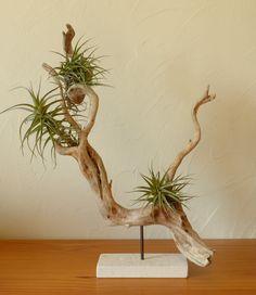 Sculpture en bois flotté , support pour tillandsias , objet déco végétal à poser, facile d'entretien