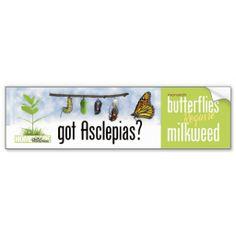Got Asclepias (Milkweed)?