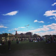 Kite flying competition at the cherry blossom festival