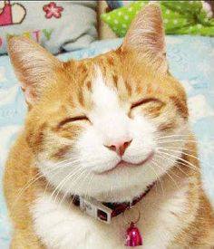 smile, this just makes me laugh!