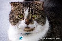 里親さんブログ忠猫ツッチー - http://iyaiya.jp/cat/archives/76171