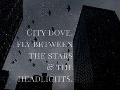 City Dove • Tori Kelly