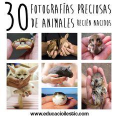 30-fotografies-precioses-d'animals-acabats-de-néixer-Educació-i-les-TIC-cast