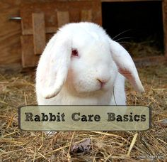 Rabbits can be a wonderful addition to your homestead. Once you know the rabbit care basics you will be on your way to successfully raising rabbits for