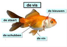 Miniatuurafbeelding voor de versie van 30 apr 2014 om 11:42 Diep, Dutch, Preschool, Projects, Rainbows, Pisces, Animales, Biology, Pirates