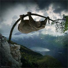 Elephant on tree... #tree