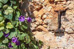 Oude muur met klimplant in Chania