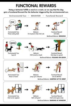 Obedience training pertains to a broad variety of abilities and strategies of te. - Obedience training pertains to a broad variety of abilities and strategies of teaching dogs, quite - Dog Training Books, Dog Training Tips, Brain Training, Positive Dog Training, Dog Care Tips, Pet Tips, Puppy Care, Pet Care, Dog Language