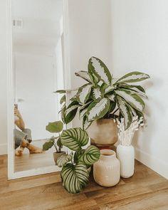 Room Ideas Bedroom, Bedroom Decor, Cosy Bedroom, Decor Room, Wall Decor, House Plants Decor, Plants In Bedroom, Living Room Plants Decor, Aesthetic Room Decor