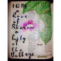 I am a rose of Sharon Lily of the valleys. Song 2:1