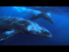 Why We Defend Oceans - Sea Shepherd Conservation Society. @SeaShepherd #defendconserveprotect