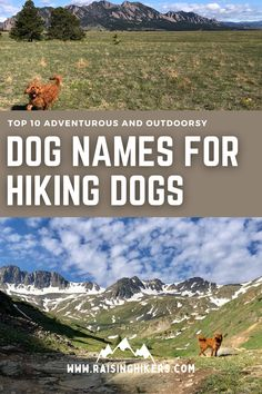 Naming a new pup? Plan to raise an outdoorsy dog who will hit the hiking trails with you? Check out these mountain lover dog names for the outdoorsy dog! We named our Labradoodle, Jasper after Jasper National Park. See the other names that were on our list! #hikingdogs #labradoodle #outdoordognames Hiking Dogs, Hiking Trails, Strong Dog Names, North Cascades National Park, Mountain Hiking, Family Adventure, Labradoodle, Family Dogs, Cool Names