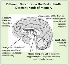 study into how the human memory works Reading on computer screens and smartphones has made people unable to fully understand what they are reading as our brains retreat into focusing on small details rather than meanings, a study claims.