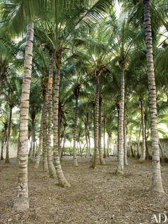 oscar-de-la-renta-dominican-republic-belle vivir blog