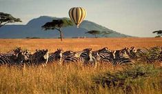Top 7 african safaris.