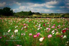 Jeju Island Flower Field
